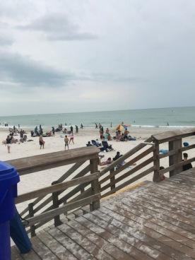The shark free beach